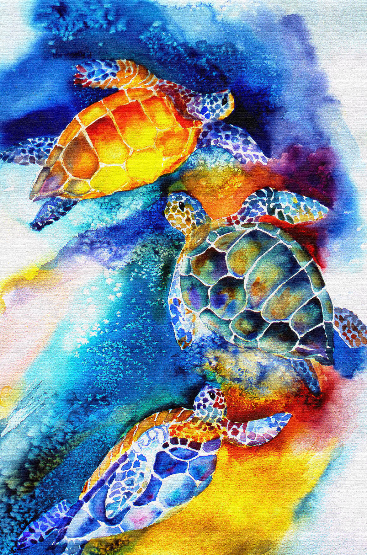 Sea Turtles on the shore